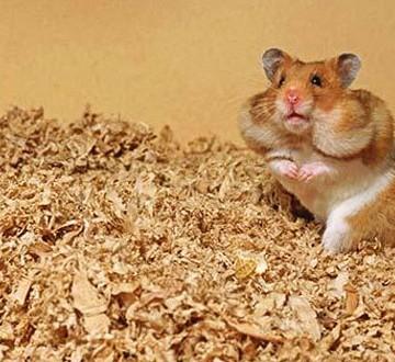 hamster-header
