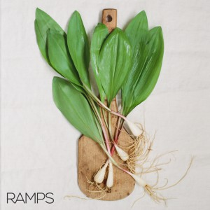 ramps foraging